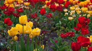colourful flowers 3
